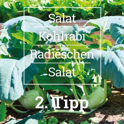 Pflanzideen für das Hochbeet - Tipp 2, Erd-Geflüster mit Regina Dunst