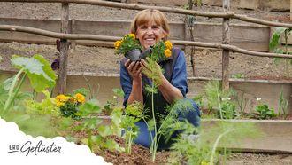 Hügelbeet bepflanzen - Ein Vorschlag, Erd-Geflüster mit Regina Dunst