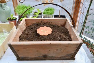 Holzkiste mit Tonblume, darauf sind die Samen - Anzuchterde