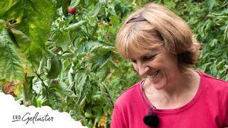 Top Tomaten Sorten, Erd-Geflüster mit Regina Dunst