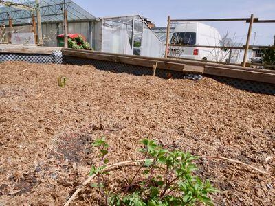 Biofaser von Sonnenerde ist die ideale Mulchschicht am Hochbeet