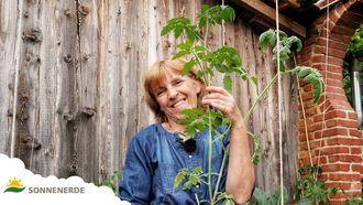 Tomaten selber anbauen und pflanzen, Erd-Geflüster mit Regina Dunst
