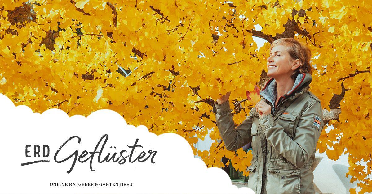 Das goldene Wunder der Natur | Der Herbst | ErdGeflüster von Sonnenerde GmbH