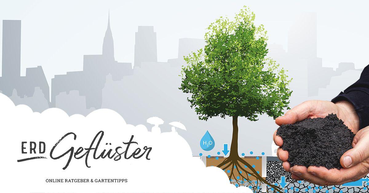 Stadtbaumpflanzung der Zukunft | Schwammstadt, Stockholmer Baumpflanzsystem | ErdGeflüster von Sonnenerde GmbH