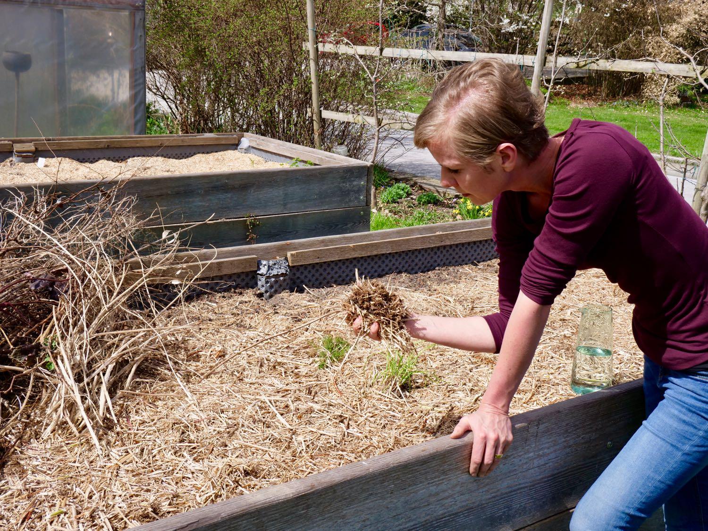 Die richtige Mulchschicht bringt unheimliche viele Vorteile, Angelika Ertl-Marko kontrolliert diese bei Ihren eigenen Hochbeeten