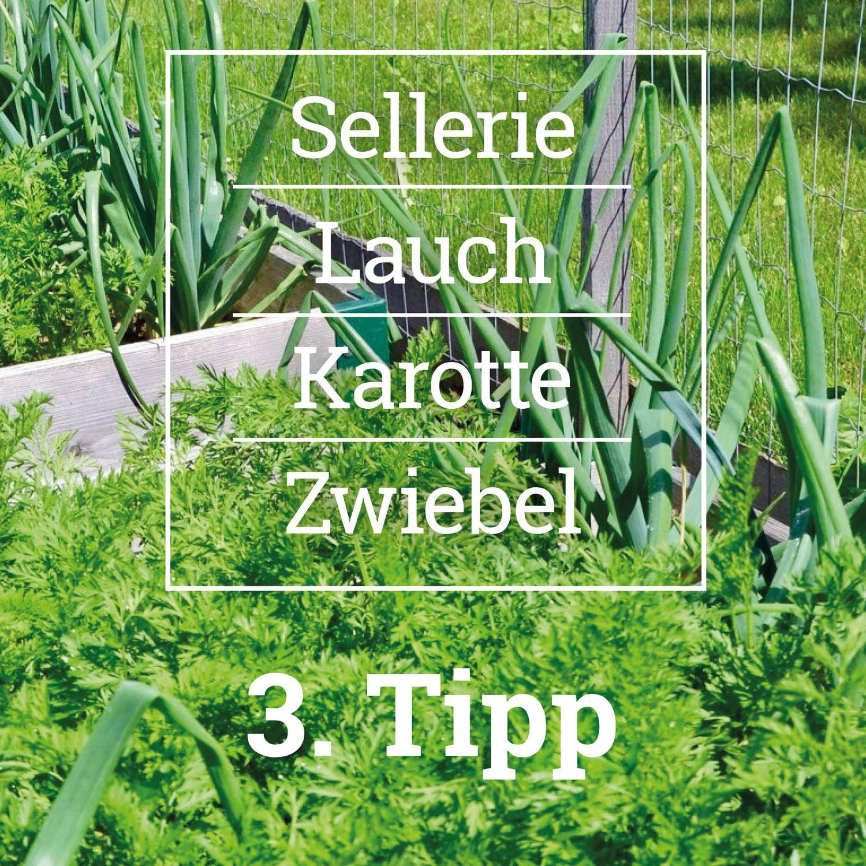 Pflanzideen für das Hochbeet - Tipp 3, Erd-Geflüster mit Regina Dunst
