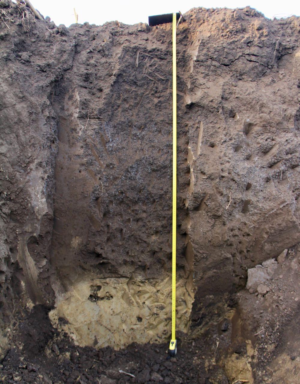 SOBAC Bodenprofil beimpft durch Bacteriosol/Bacteriolit/Quaterna Plant, Sonnenerde