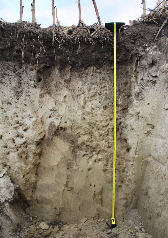 SOBAC Bodenprofil Vergleichssfläche - schlechter Boden, Sonnenerde